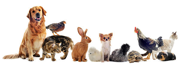 group animals