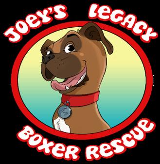 Joeys Boxer Legacy